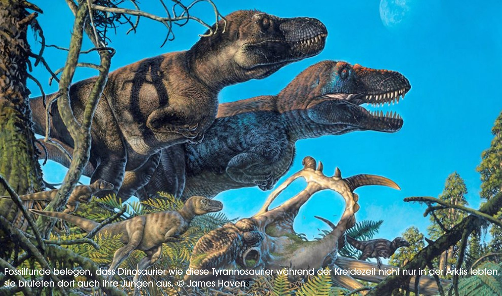 Dinosaurier nisteten sogar in der Arktis