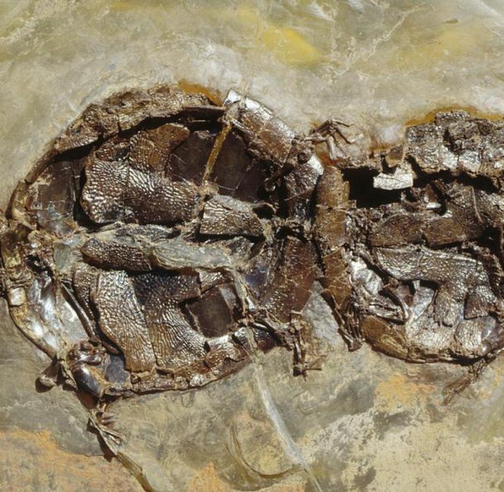 Außergewöhnliches Vogelfossil entdeckt
